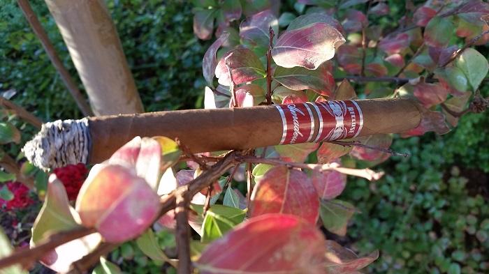 Team Cigar Review: Recluse Amadeus Habano Reserva Lancero