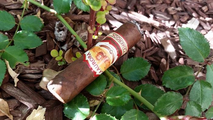 Team Cigar Review: La Aurora 1903 Cameroon Robusto