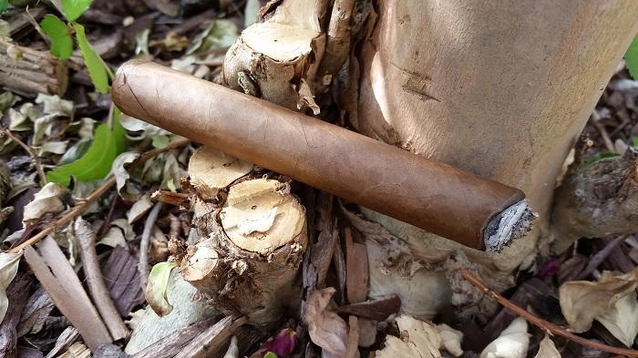 Team Cigar Review: Warped Lirio Rojo